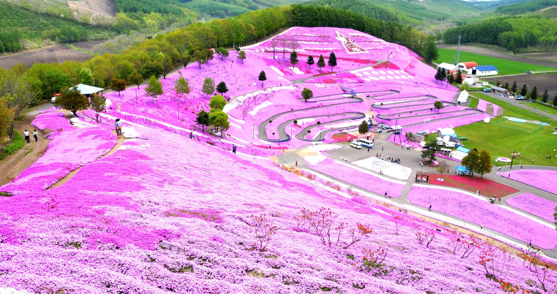 Beautiful Flower Garden Higashimokoto Shibazakura Park Hokkaido Supersilly Traveller